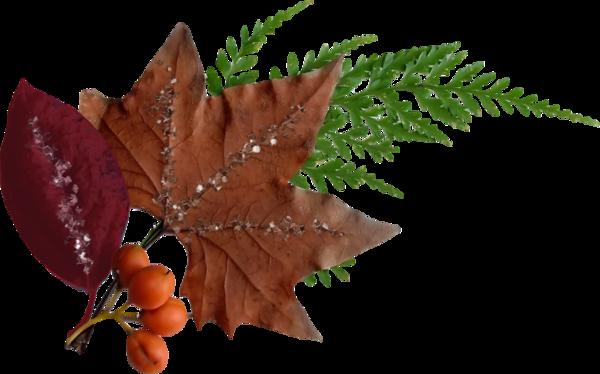 feuilles,folhas,deja,leaves,fall