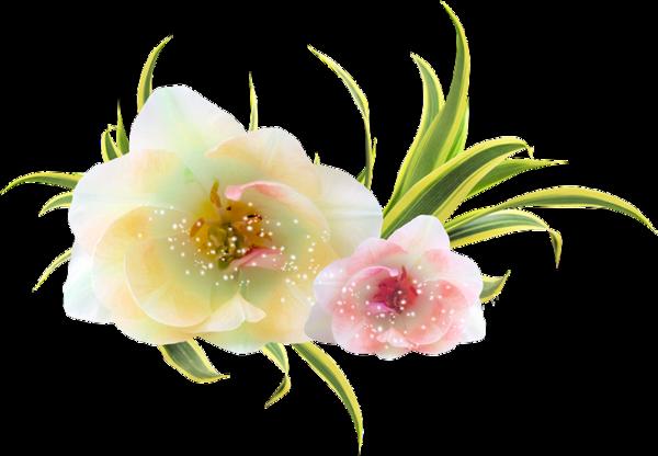 tubes fleurs,fleurs, éclat,