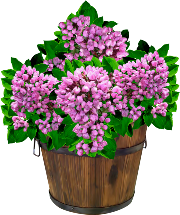Fleurs page 24 - Decorer un vase transparent ...