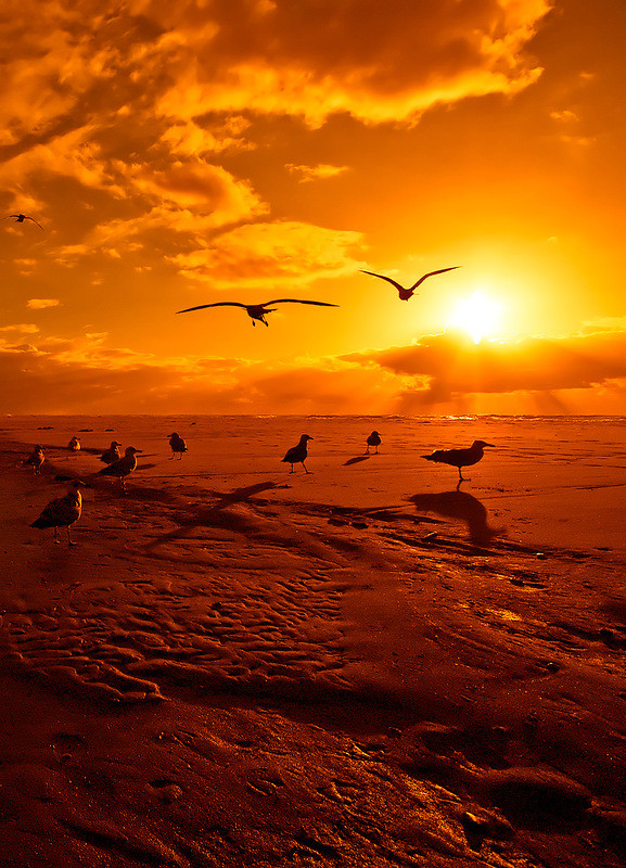 Images coucher de soleil - Page 3 0f0a6219