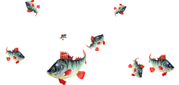 poissons,fish