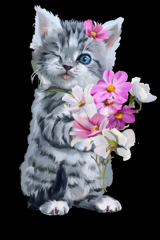 chatons,chats,minou,matou,felin,tube,dessin,png