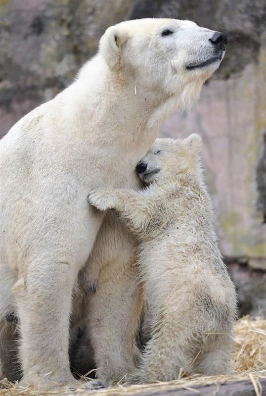 Les ours - Page 4 11c0d136