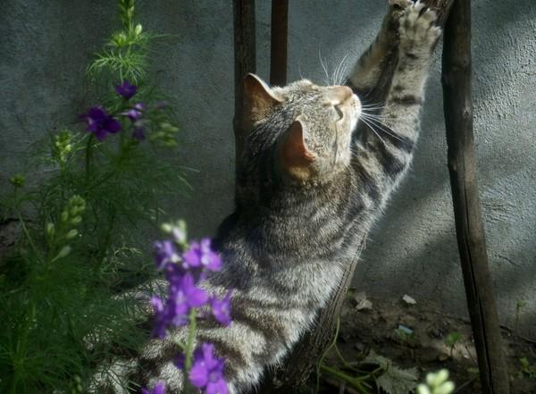 chatons,chats,gatinho,gatito,katje
