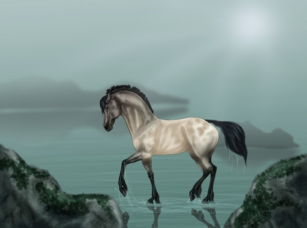 cheval,wallpapers,background
