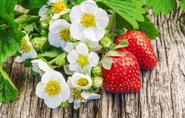 fraises,fruits