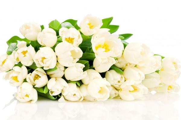 fond d ecran fleurs,wallpapers,fleurs,flowers