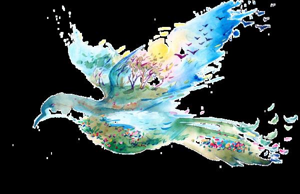 oiseaux,birds,dessin,png,couleur