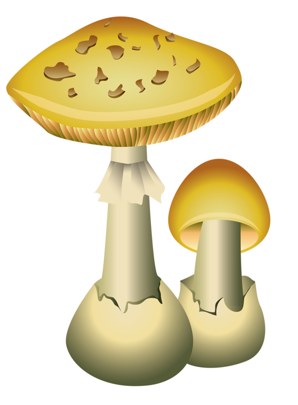 champignons,png,tubes