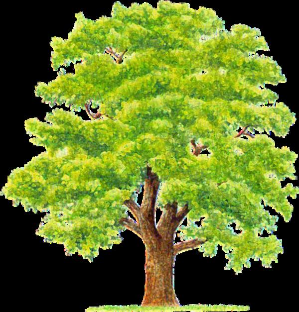 سكرابز شجر للتصميم جملى تصميمك بأحلى سكرابز اشجار 2017