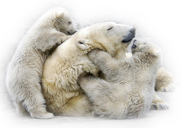 Les ours - Page 4 4f1c9865