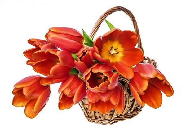 bouquets,fleurs,flowers,tubes