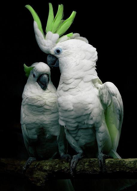 Les oiseaux - Page 8 581b03ef