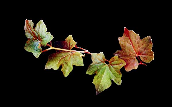 feuilles,automne,tube