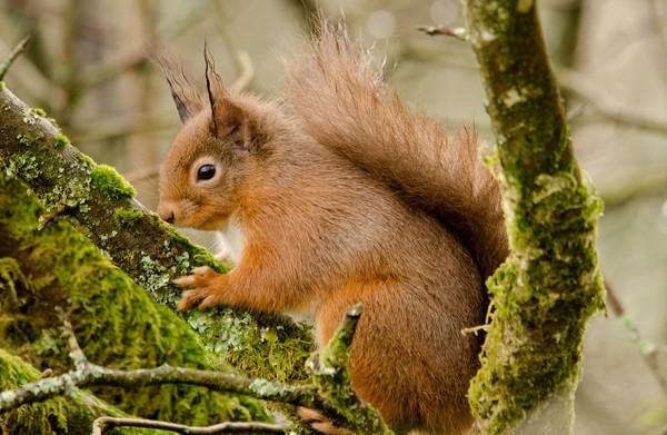 ecureuils