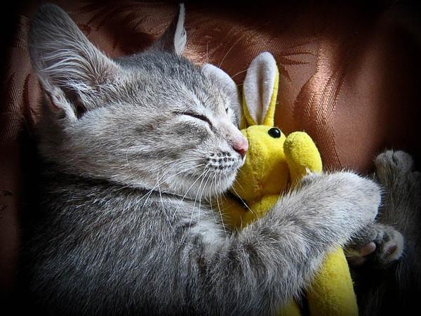 chats,chatons,fond d ecran,