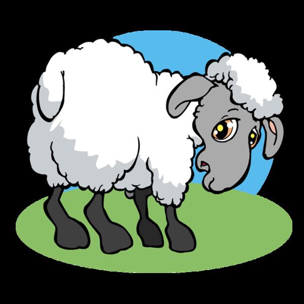 Le mouton nu oklahoma