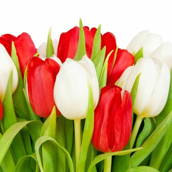 fond d ecran fleurs,wallpapers,flowers