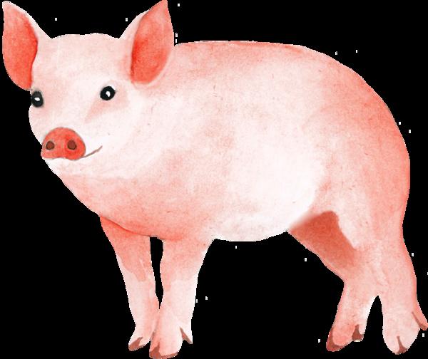 """Résultat de recherche d'images pour """"Cochon images tubes"""""""