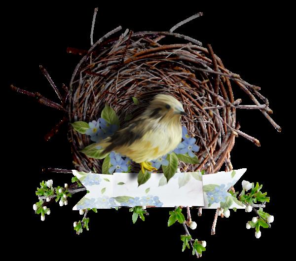 oiseaux,birds