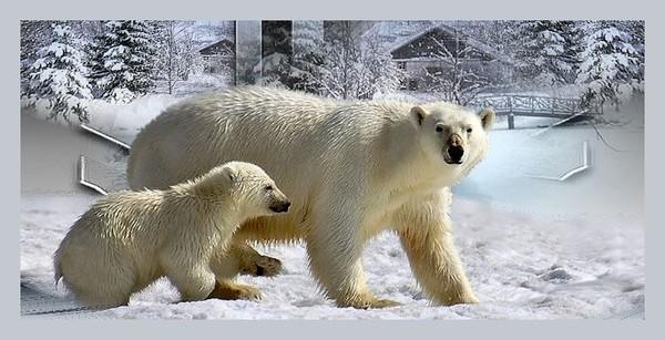Les ours - Page 4 794d1b60