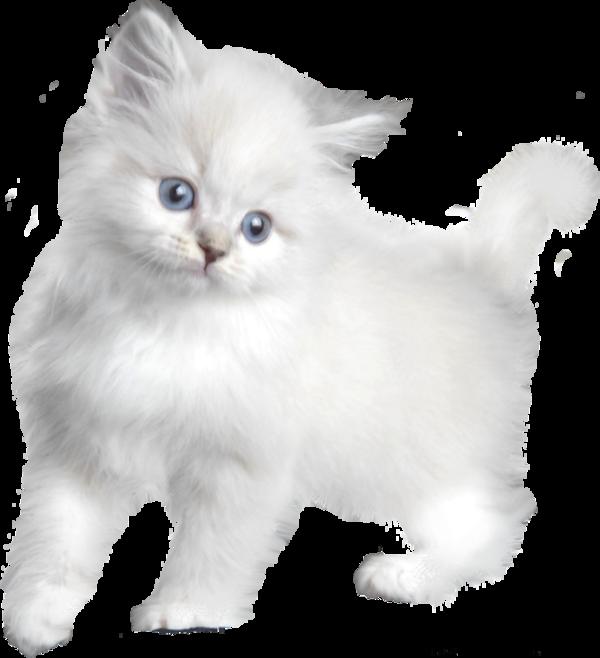Fantasia de una PrinCesa: Bonitos animales en Gifs y glitter