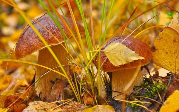 Les champignons  914ee67e