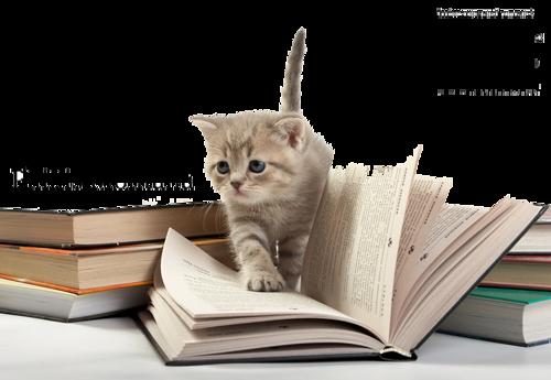 Výsledok vyhľadávania obrázkov pre dopyt png gif mačkák cicák