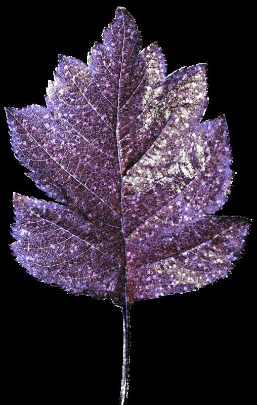 Je vois la vie en mauve violet parme page 149 supertoinette for Mauve la vie claire