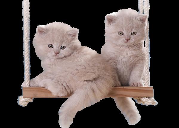 chats chatons gifs,