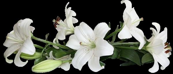 fleurs,bouquets,flowers,flores,blommor