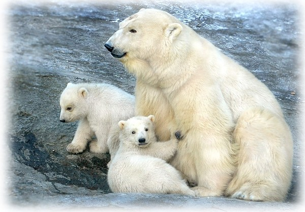 Les ours - Page 4 Aa0762ac