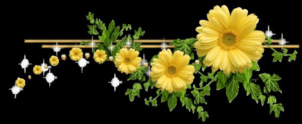 Пионы цветы пнг 8