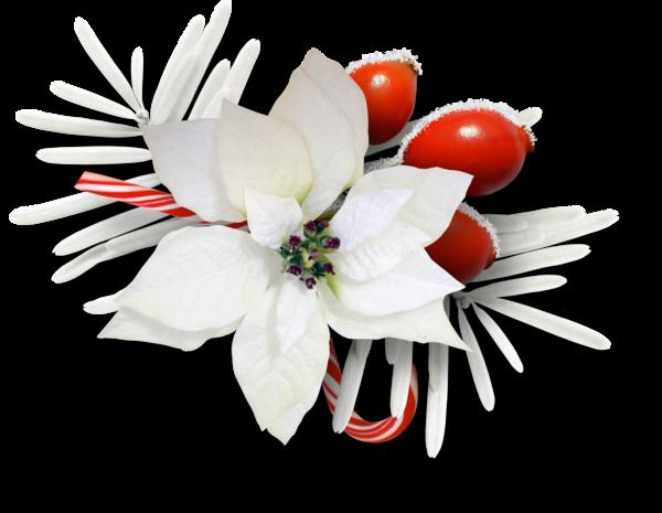 fleurs,tube,flowers,png,noel