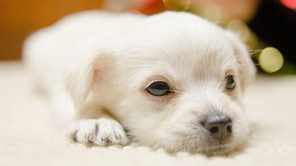 chiens,perro,Hund,dog,cane,hundur,madra,hond,