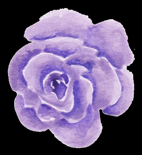 roses,pink,roze,rosa,fleur