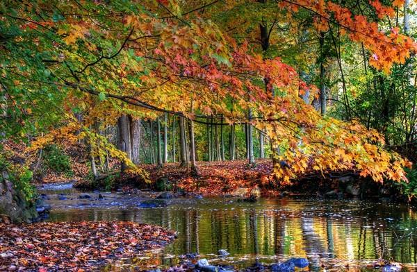 automne,autumn,paysage,