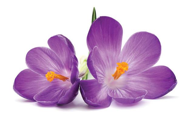 fleurs,bouquets,flowers,flores,blommor,