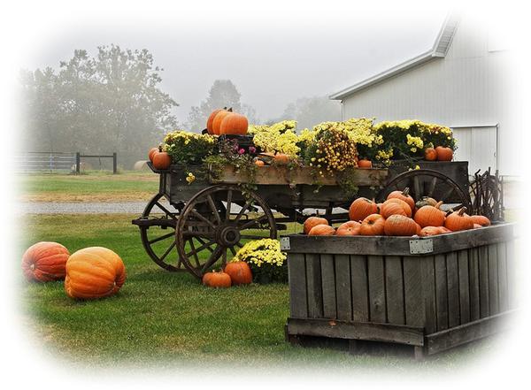 citrouilles,tubes,png,calabazas,pumpkins