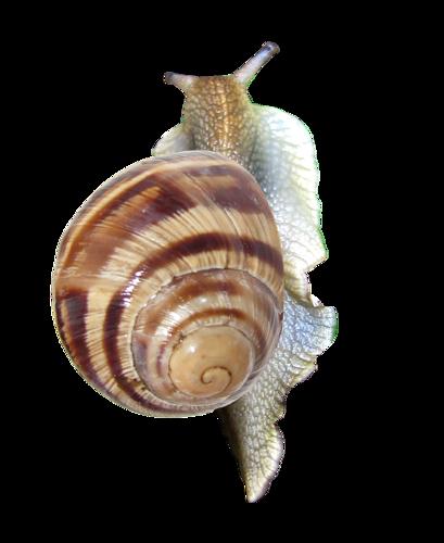 escargots,tubes