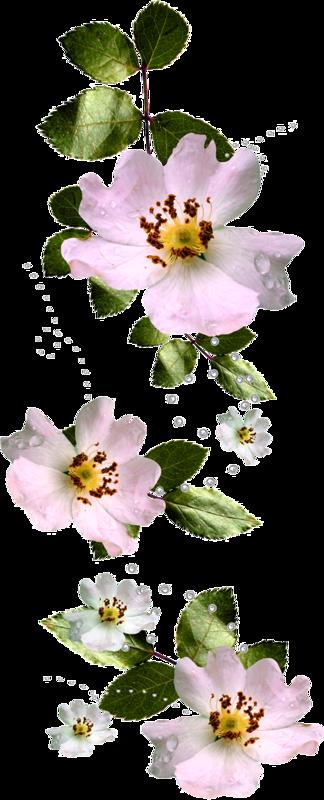 tubes fleurs,fleurs, éclat, ornement,