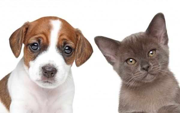 chiens,chats,