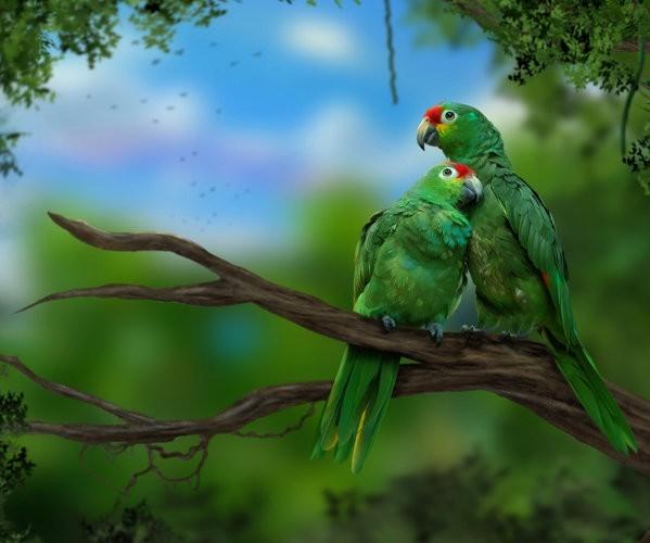 Les oiseaux - Page 8 Ff3d0486