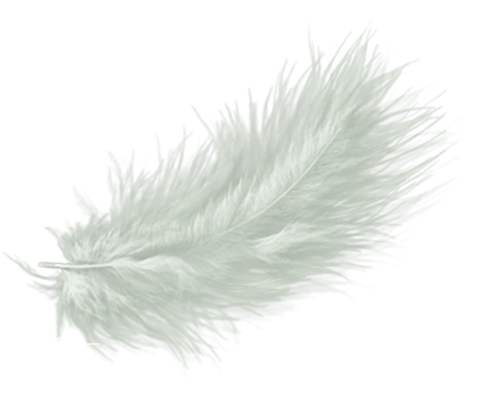 falling feathers png - 1000×834