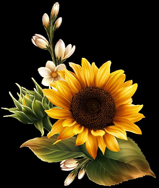Zolty Slonecznik Slonecznik Zwyczajny Slonecznik Paki Wspolny Slonecznik Png In 2021 Sunflower Illustration Sunflower Painting Yellow Flower Art