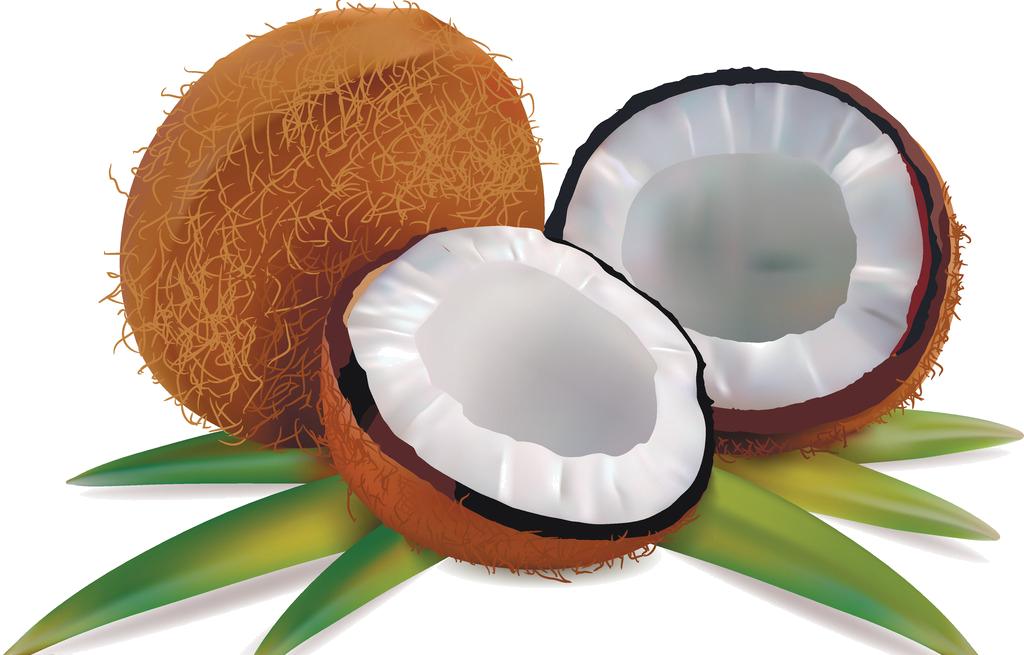 Fruits et legumes page 139 - Dessin noix de coco ...