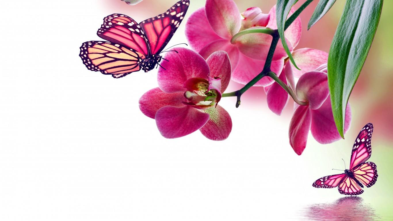 Fond d ecran fleurs wallpapers fleurs flowers for Fond ecran ete fleurs