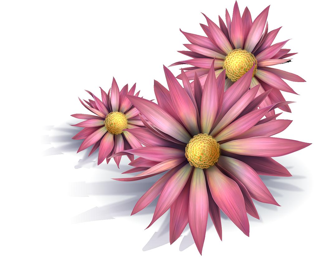 ... 11/2015 à 12:58 par zezete2 Tags : fleurs flores flowers bloemen png