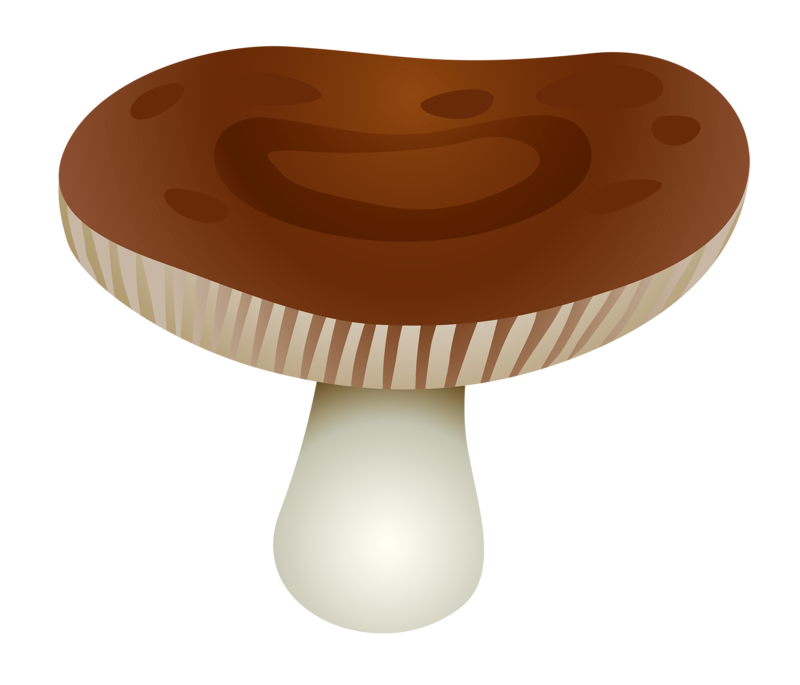 champignons mushroom pilz seta cogumelo. Black Bedroom Furniture Sets. Home Design Ideas