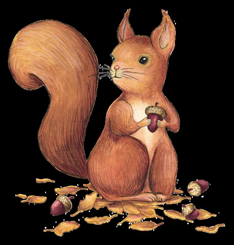 Ecureuils Roux Couleur Dessin